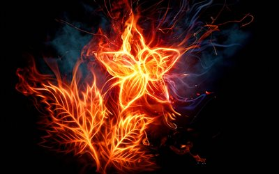 burning flower, darkness, fire flames, abstract art, flower of fire, flowers, smoke, flower on fire