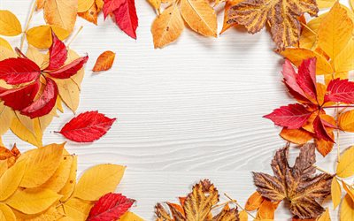 autumn frame, yellow leaves frame, white wooden background, autumn, natural frames, autumn leaves