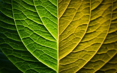 green leaf texture, ecology concepts, leaf, nature, industry influence