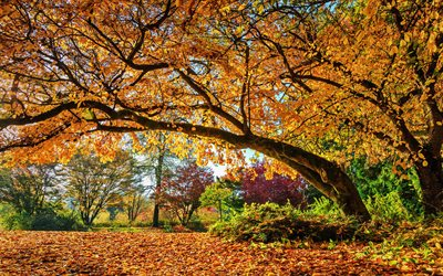 autumn, HDR, park, forest, yellow trees, sunny day, beautiful nature