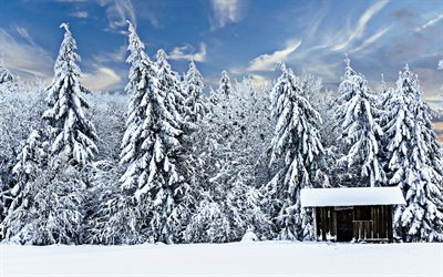 winter, snow-covered trees, forest, drifts, hut, beautiful nature, winter forest
