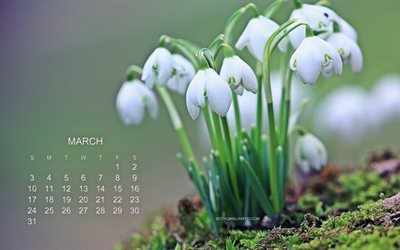 2019 March Calendar, snowdrops, green background, spring, forest, 2019 calendar, spring flowers, calendar for March 2019, flowers