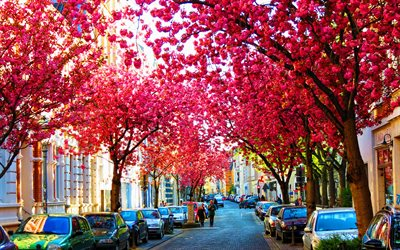 Bonn, sakura, spring, german cities, Europe, Germany, Cities of Germany, cherry blossom, Bonn Germany, cityscapes, HDR