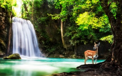 Kanchanaburi, forest, waterfall, deer, Erawan National Park, Thailand