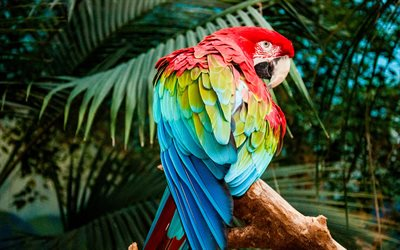 4k, Macaw, zoo, parrots, branch, colorful parrots, Ara
