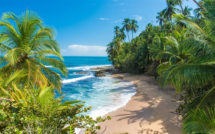 Caribbean, tropical island, ocean, bay, palm trees, beautiful islands, summer travel, Costa Rica